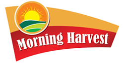 Morning Harvest -